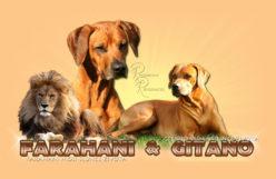 FARAHANI & GITANO